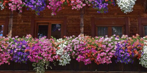 Flower Balcony in Alpbachtal