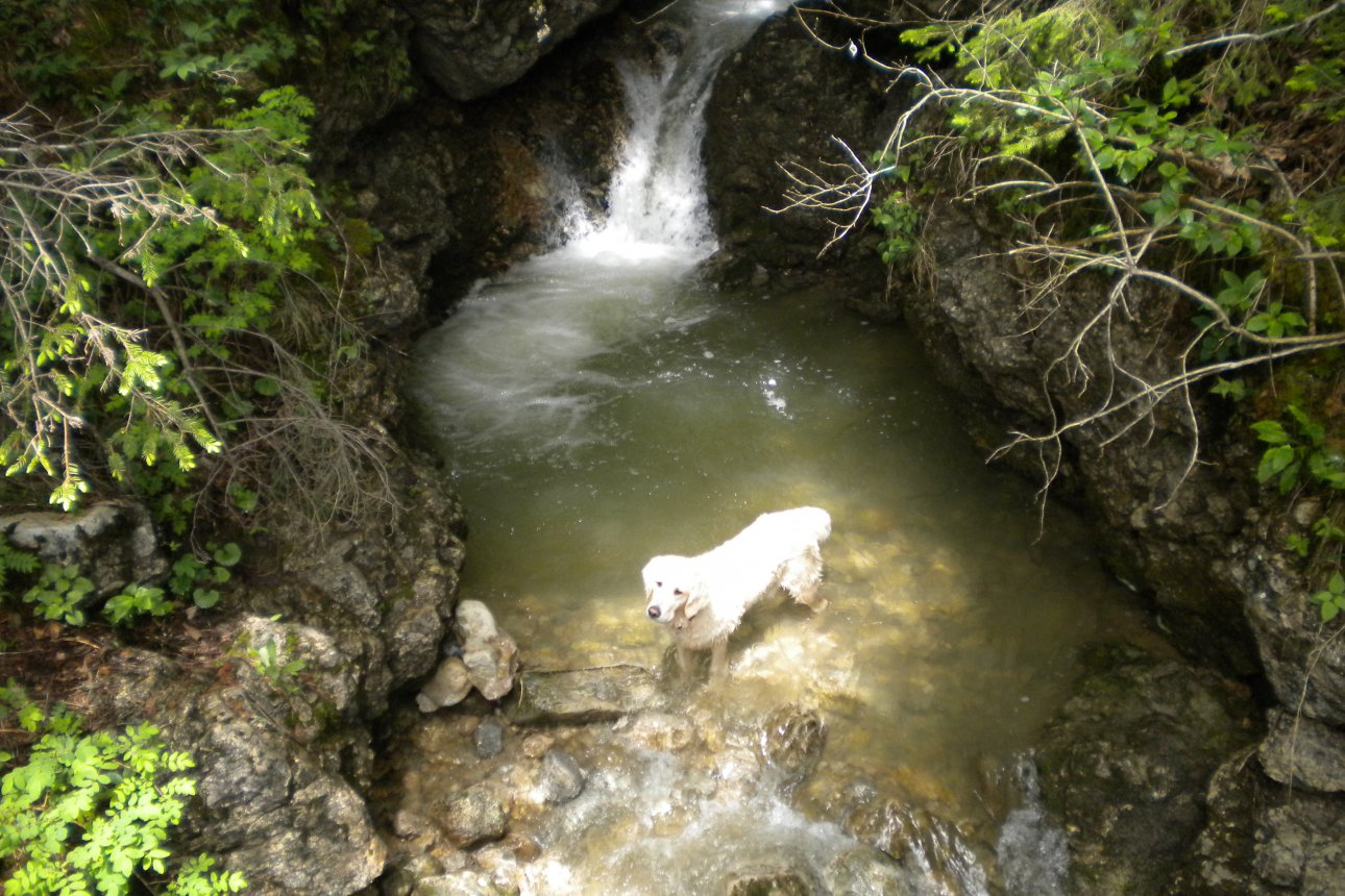 Dog in water bassain