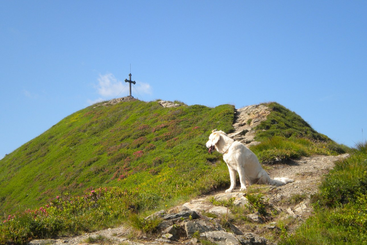 Dog near the Wiedersbergerhorn Peak