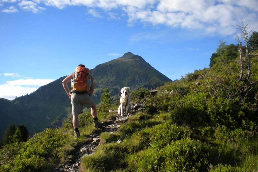 Hiking tour with a dog - Galtenberg