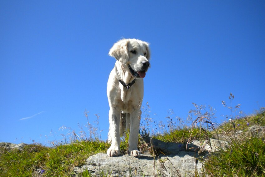 Dog waiting on a hiking tour