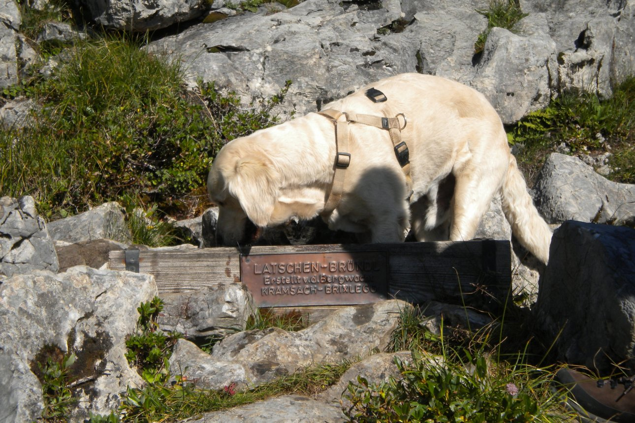 Dog drinking form a well - Latschenbründl